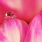PINK Collection for the Cure - Her tears by trwphotography