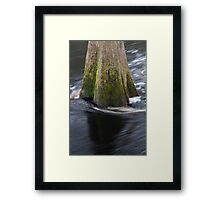 Cypress Tree Framed Print