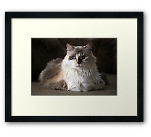 Mia the kitty Framed Print