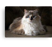 Mia the kitty Canvas Print