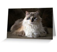 Mia the kitty Greeting Card