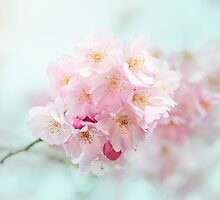 Cherry Blossom by Jacky Parker