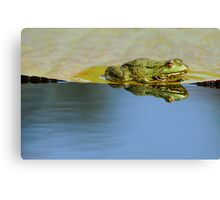 frog in the mirror Canvas Print
