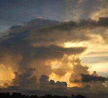 ALLIGATOR IN THE SKY by Carol Barona