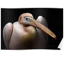 Pelican Beauty Poster