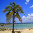 Lonely Palm Tree :) by Honor Kyne