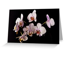 ORCHID 1054 (GREETING CARD ONLY) Greeting Card