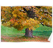 Falling Leaves Poster