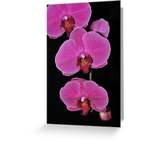 ORCHID 1086  (GREETING CARD ONLY) Greeting Card