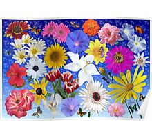 Butterflies And Blooms Poster