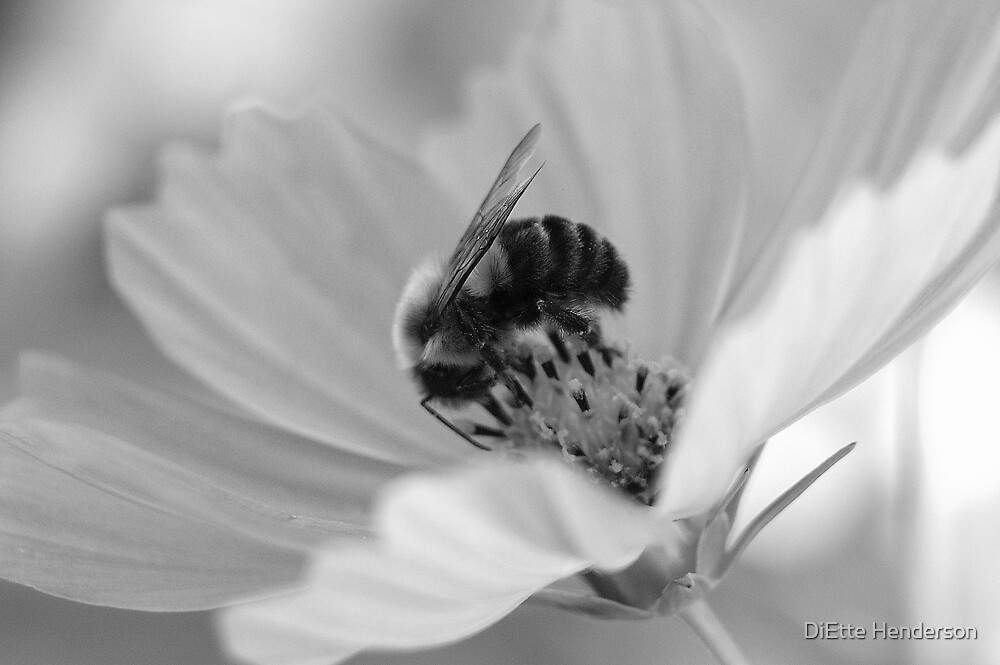 Cosmos and Bumble (in black and white) by DiEtte Henderson