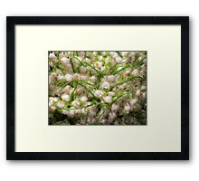 Lilies of the valley 4 Framed Print