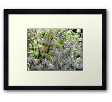 Lilies of the valley 6 Framed Print