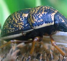 Don't Bug Me by Heavenandus777