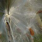 Silks by Anne Smyth