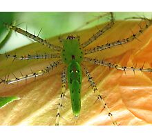 Neon Green Spider Photographic Print