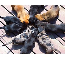 Puppy Chow Photographic Print