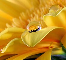 Gerbera's Drop of Life by SmoothBreeze7