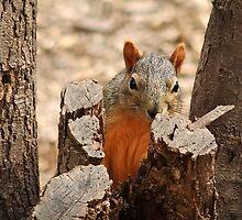 Peek-a-boo! by Richard G Witham
