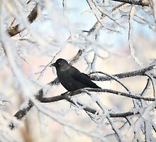 crow on snow-covered tree by mrivserg