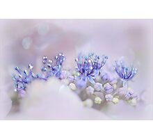 Nature's little Tiara Photographic Print
