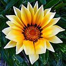 One flower by Ben Kelly