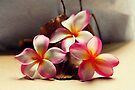 Painted Pink Frangipani & Seed Pods by Evita