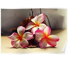 Painted Pink Frangipani & Seed Pods Poster