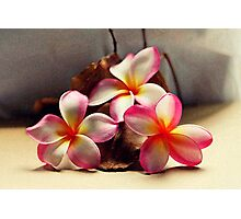 Painted Pink Frangipani & Seed Pods Photographic Print