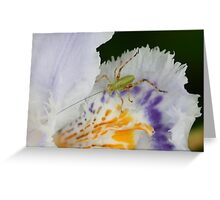 Cute little bug on an iris Greeting Card
