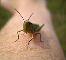 Grasshopper Up Close by Richard Durrant