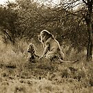 Jungle Love by Carlton Grooms