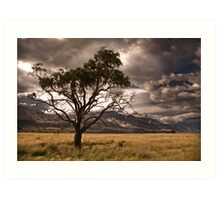 Half dead tree in stormy valley Art Print