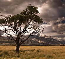 Half dead tree in stormy valley by peterwey