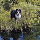 Buddy on the banks of Spring Creek by Edward Henzi