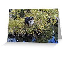 Buddy on the banks of Spring Creek Greeting Card