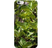 Warka Tree Leaves iPhone Case/Skin