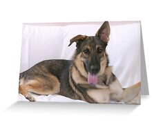 German Shepard Mix Greeting Card