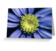 Blue Aster Greeting Card