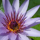 Waterlily and the bee by Eliza1Anna
