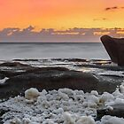 Dolphin on the Rocks - Sunshine Coast Qld Australia by Beth  Wode