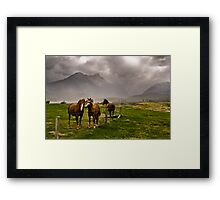 Three horses awaiting an approaching storm  Framed Print