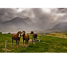 Three horses awaiting an approaching storm  Photographic Print