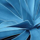 Blue Agave by David Schroeder