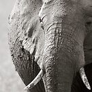 Portrait of an elephant - 3 by Yves Roumazeilles