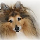 Like cute, fuzzy dogs? Get a Sheltie! by Christine Till  @    CT-Graphics