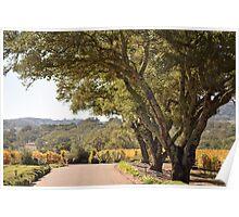 Drive through the vineyard Poster
