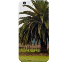 Palm Tree living in the vineyard iPhone Case/Skin