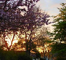 I Watch The Sunrise by MidnightMelody