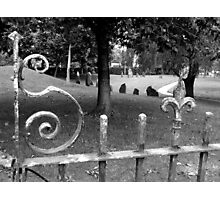 Fence Shape Photographic Print